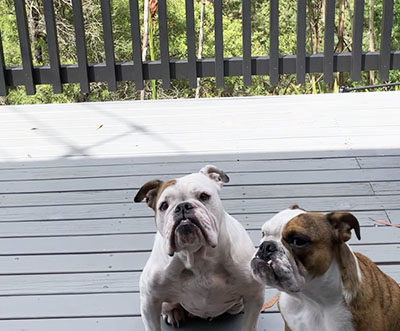Frankie and Teddy on the deck